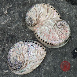 Trés belle Coquille Abalone semi-polie 16 à 17 cm pour fumigation et purification
