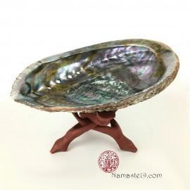 Grande Abalone 14/17 cm et support bois
