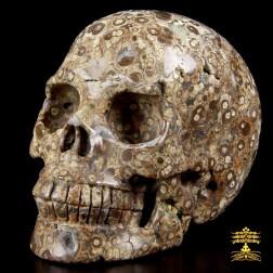 17/24 Très beau crâne en jaspe Astéroïde (jaspe orbiculaire). Crâne d'ancrage et de mémoire cellulaire.