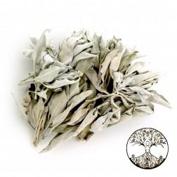 250gr de sauge blanche bouquet vrac