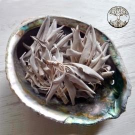 500 gr de sauge blanche de fumigation bouquet vrac